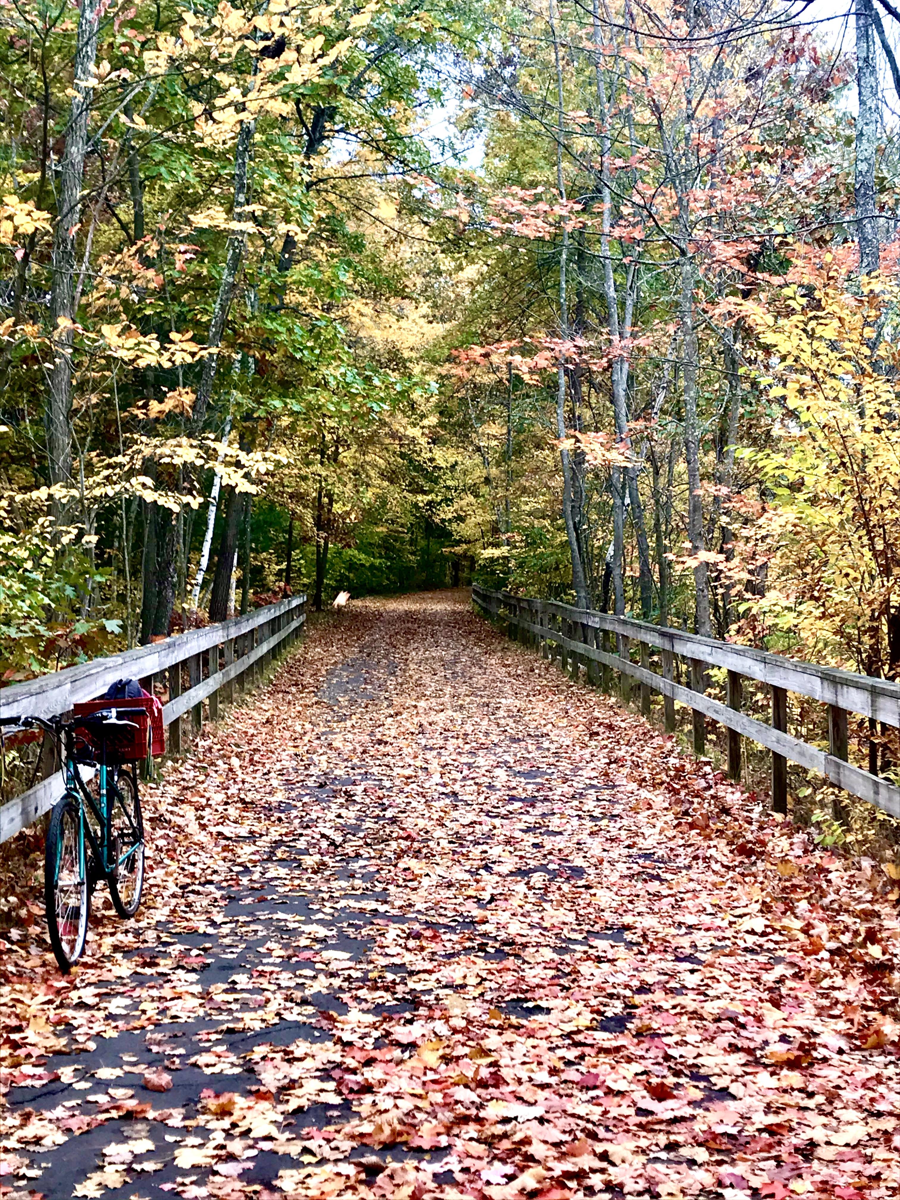 Autumn on biketrail
